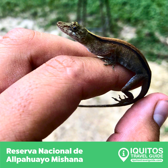 Circuito Turístico de la Carretera Iquitos-Nauta