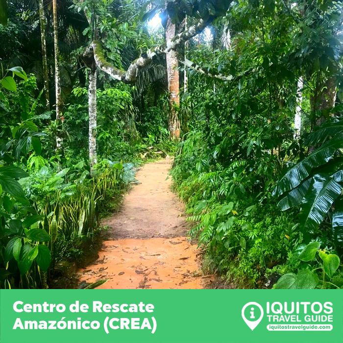 El Centro de Rescate Amazónico de Iquitos (CREA)
