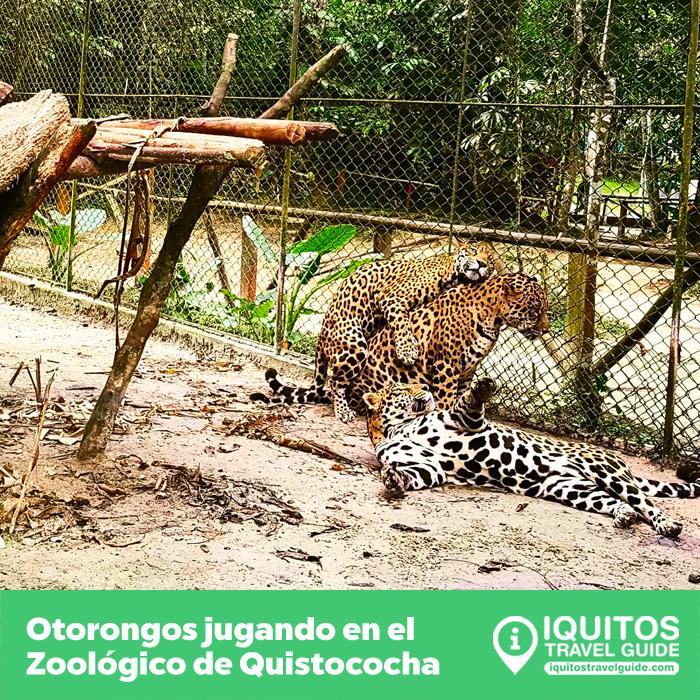 Complejo Turístico y Zoológico de Quistococha Iquitos