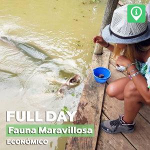 Full Day – Fauna Maravillosa [Económico]