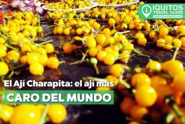 El Ají Charapita: el ají más caro del mundo